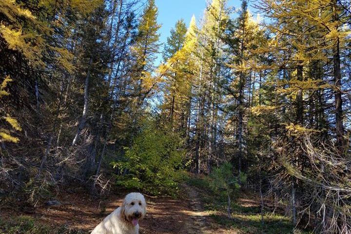 Pet Friendly Tronsen Ridge