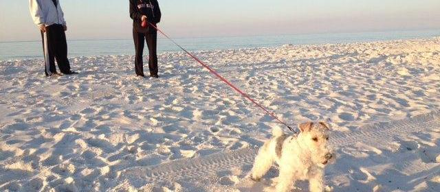 Pensacola Beach East Dog Park
