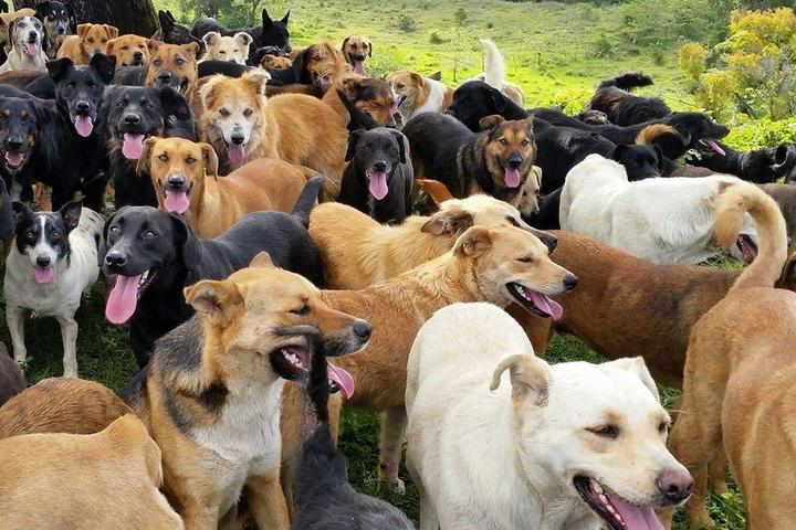 Pet Friendly Territorio De Zaguates - Land Of The Strays