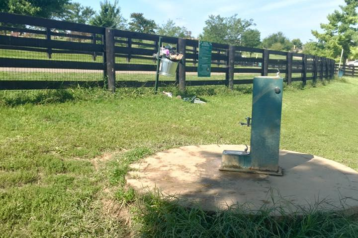 Pet Friendly Judy Rains Memorial Dog Park at Lake Reba