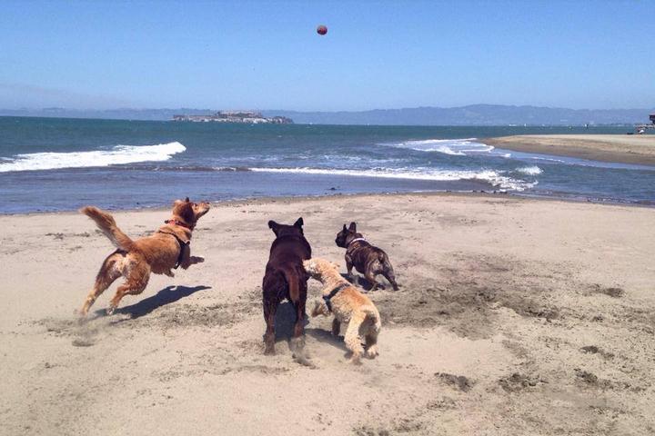 Pet Friendly Stinson Beach