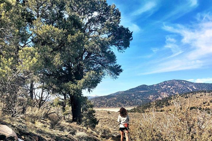 Pet Friendly Pacific Crest Trail Hike with Car Shuttle