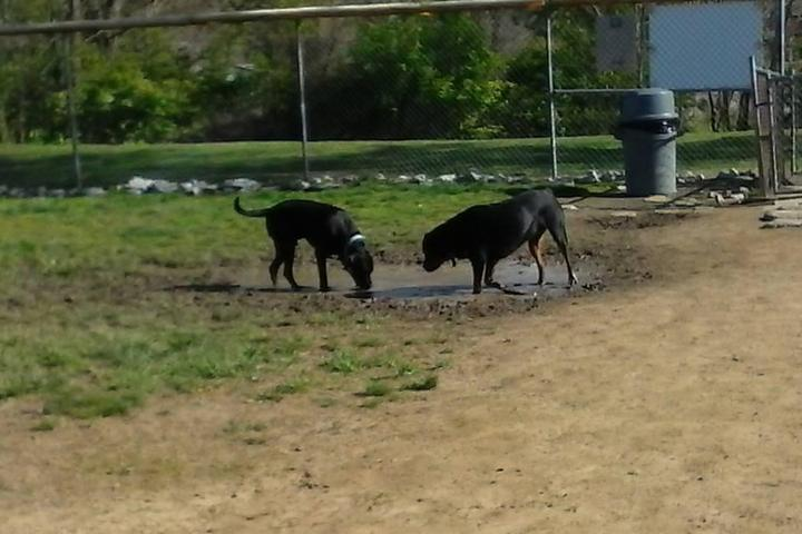 Pet Friendly East State Street Dog Park