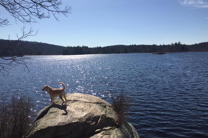 Pet Friendly Appalachian Trail (Dutch Hollow & Harriman State Park)