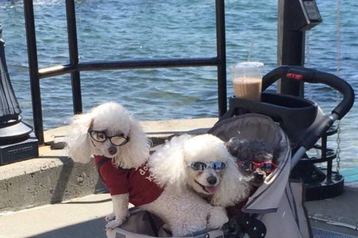 Pet Friendly Lake George Cruises