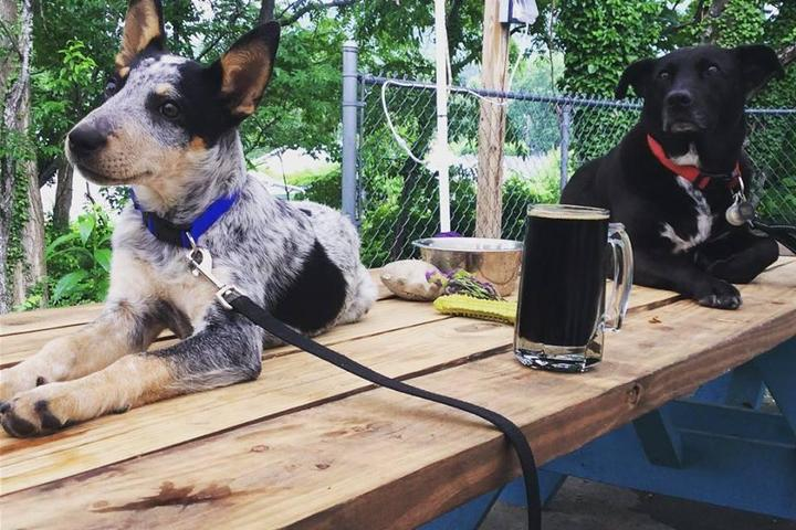 Pet Friendly Lookout Brewing Company