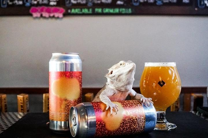 Pet Friendly Other Half Brewing Company