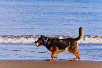 Pet Friendly Brant Beach