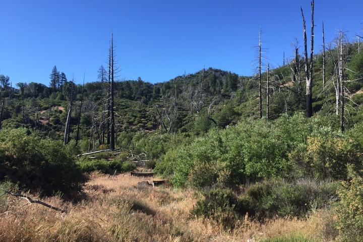 Pet Friendly Little Bear Creek Trail