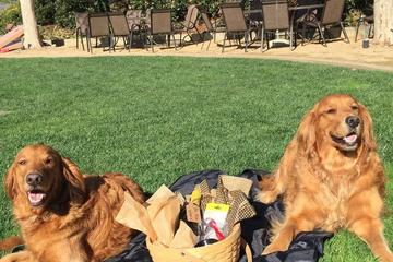 Pet Friendly Talley Vineyards