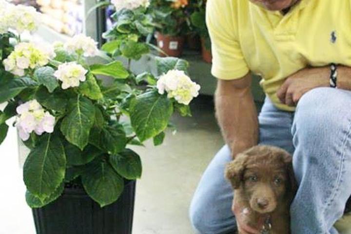 Pet Friendly Pike Nurseries