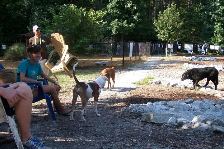 Pet Friendly PTC Dog Park