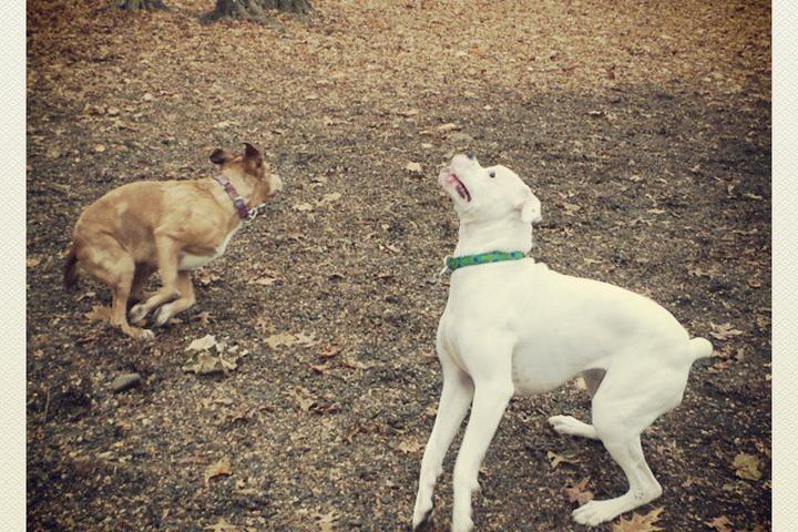 Pet Friendly Hamden Dog Run at Bassett Park