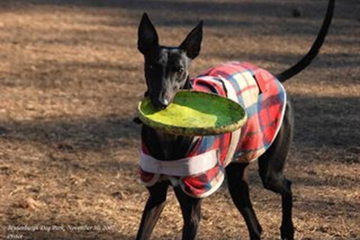 Pet Friendly Blydenburgh Dog Park at Blydenburgh County Park