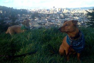 Pet Friendly Kite Hill Open Space