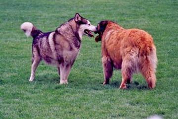 Dog Friendly Activities In Escondido Ca Bringfido