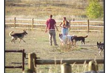 Pet Friendly Spring Canyon Dog Park
