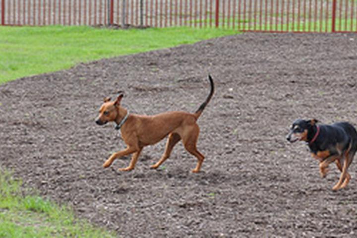 Pet Friendly Pflugerville Bark Park (at Falcon Pointe)