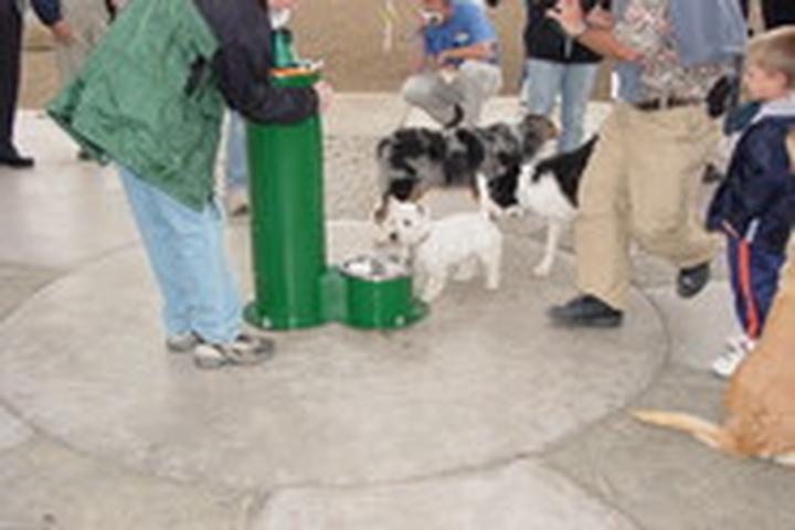 Pet Friendly Sandy Dog Park