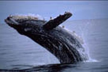 Pet Friendly Monterey Bay Whale Watch