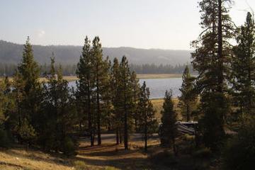 Pet Friendly Woodland Trail