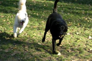 Pet Friendly Watson Upper Valley Dog Park