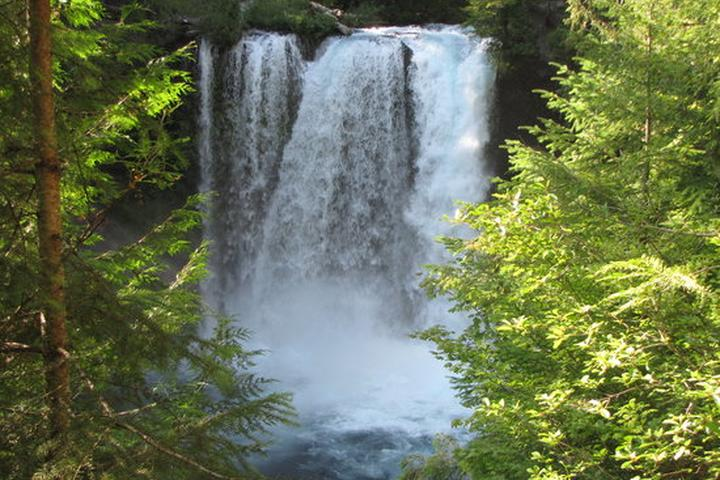 Pet Friendly Sahalie & Koosah Falls