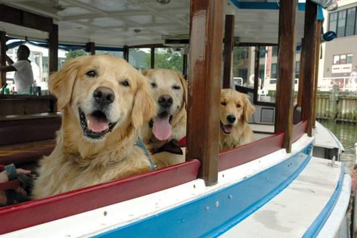 Pet Friendly Potomac Riverboat Company Canine Cruises
