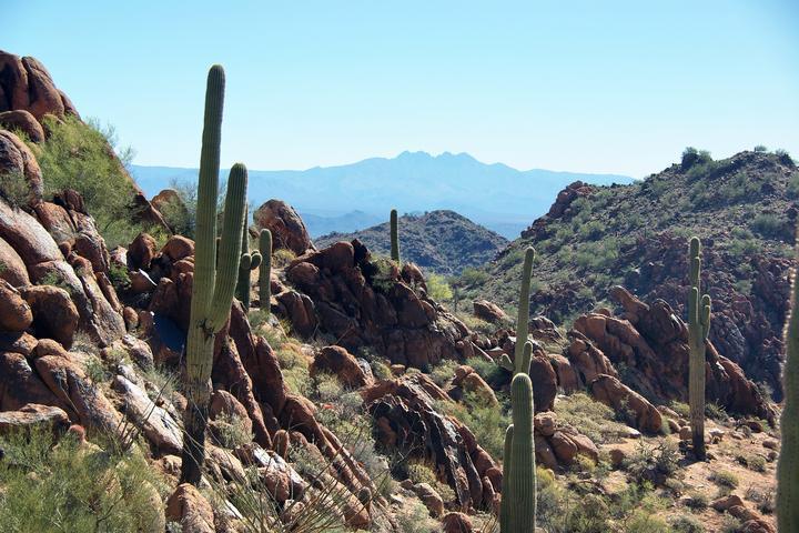Pet Friendly McDowell Sonoran Preserve
