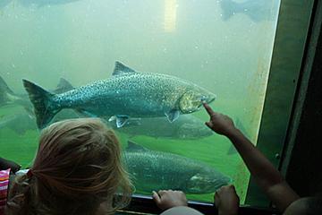 Pet Friendly Ballard Locks