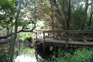 Pet Friendly Sea Pines Forest Preserve