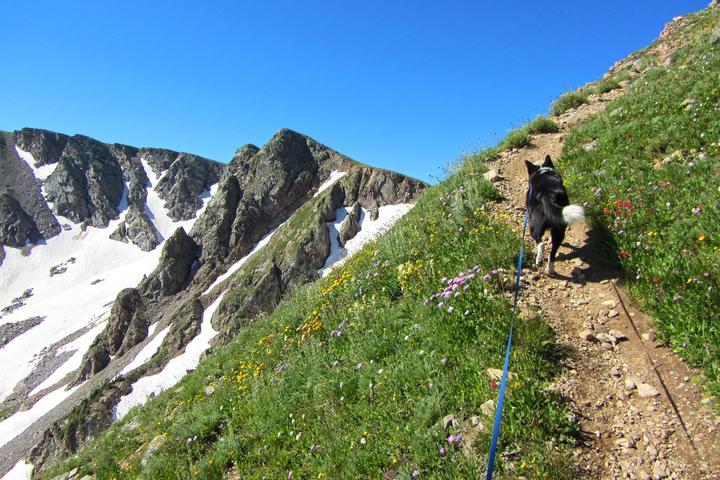 Pet Friendly King Lake and Devils Thumb Loop Trail