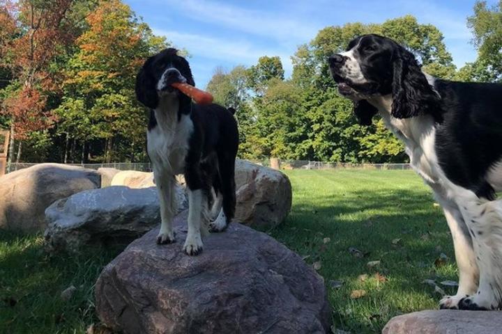 Pet Friendly Off the Leash Dog Park