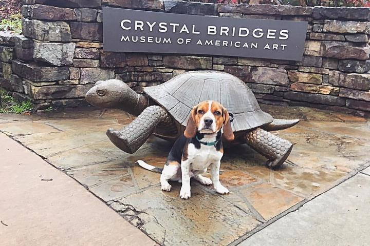 Pet Friendly Crystal Bridges Trails and Grounds