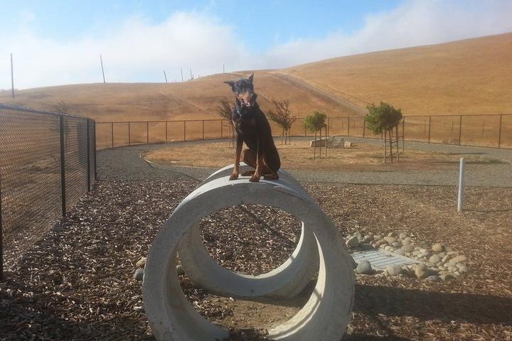 Pet Friendly Cordelia Community Dog Park