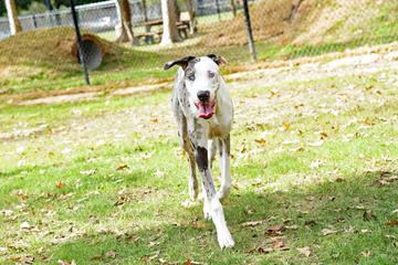 Pet Friendly Bark Park at Countryside