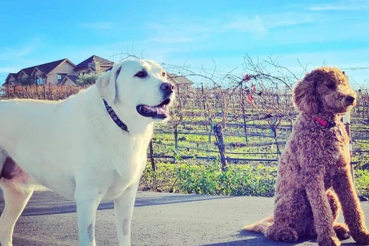 Pet Friendly Wolff Vineyards