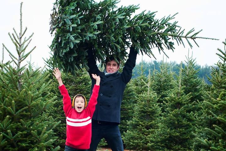 Pet Friendly Moose Apple Christmas Tree Farm