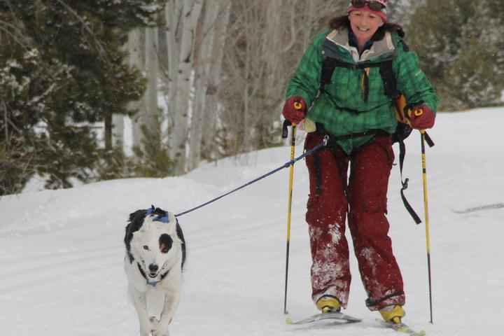 Pet Friendly High Country Dogs