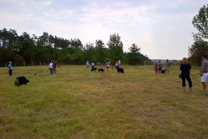 Pet Friendly Barrie Molson Centre Dog-Off Leash Recreation Area