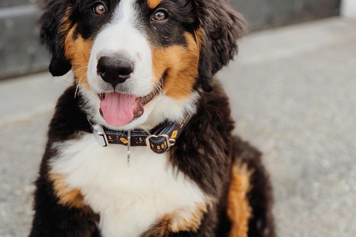 Pet Friendly Yellow Dog Brewing Company
