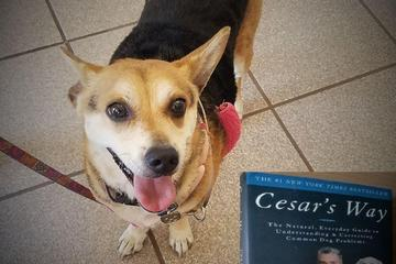 Pet Friendly Book Place San Diego