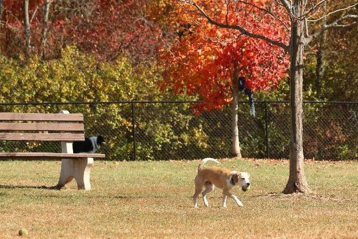 Pet Friendly Rocky Hill Off Leash Dog Park