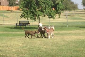 Pet Friendly Jimmie Low Community Dog Park