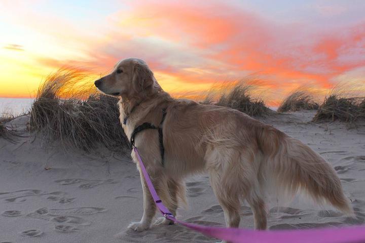 Pet Friendly Sleeping Dunes National Lakeshore