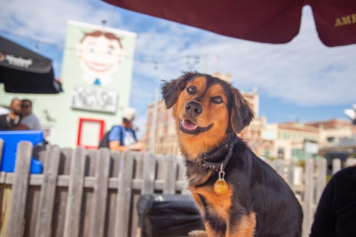 Pet Friendly Wonder Bar Yappy Hour