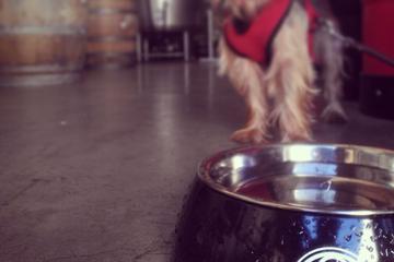 Pet Friendly Monkish Brewing Company