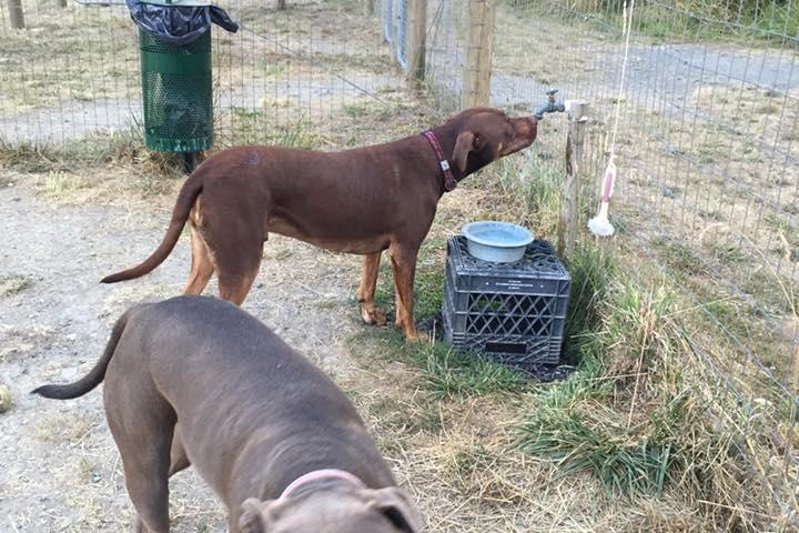 Pet Friendly Pup Town Dog Park