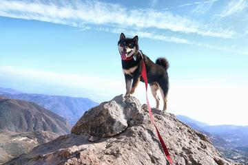 Pet Friendly Mishe Mokwa to Mount Allen Trail