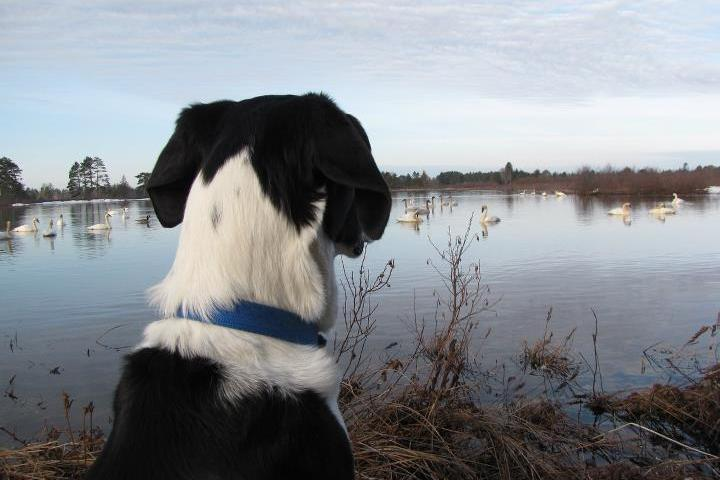 Pet Friendly Seney National Wildlife Refuge